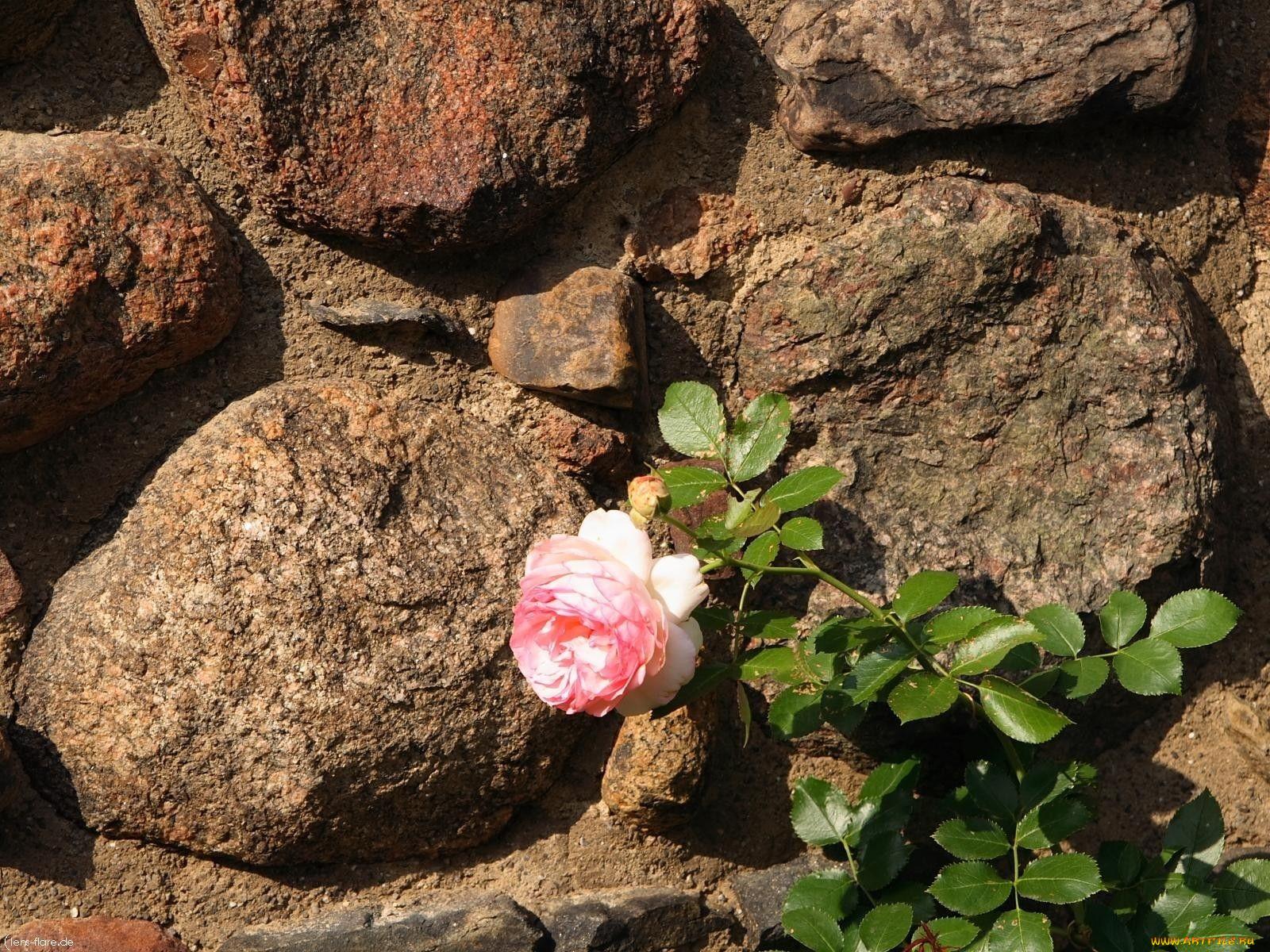 розы из камня фото имя советского подводника